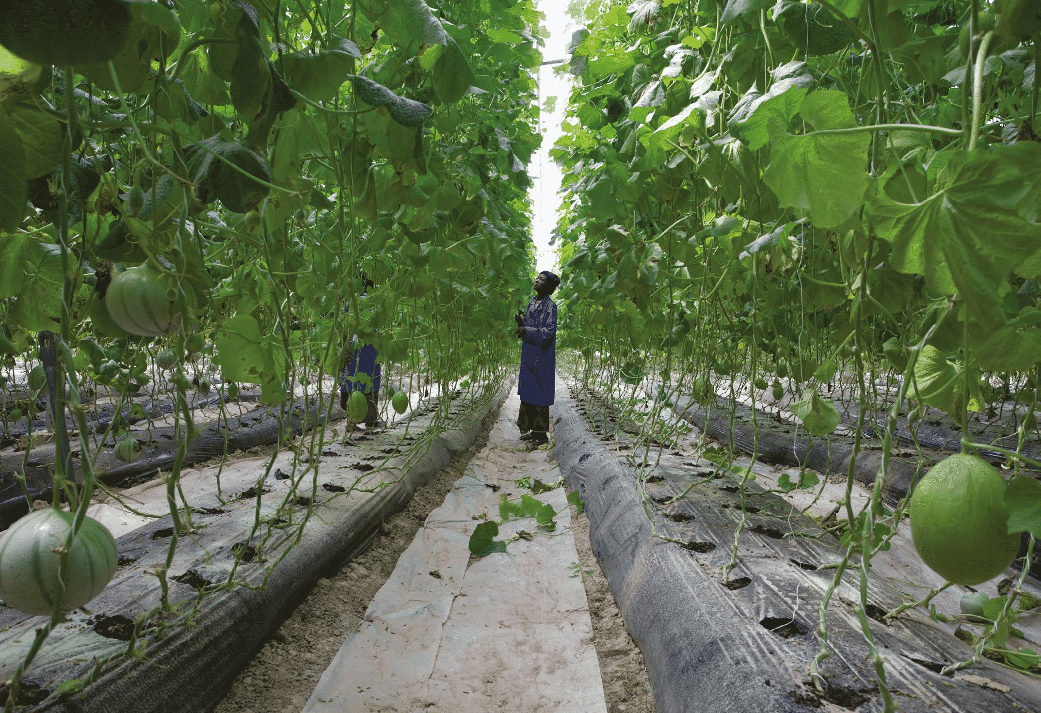 Hervé lejeune agriculture afrique potentiel