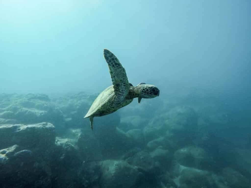 PEPS : 12 propositions pour un océan écologique et solidaire