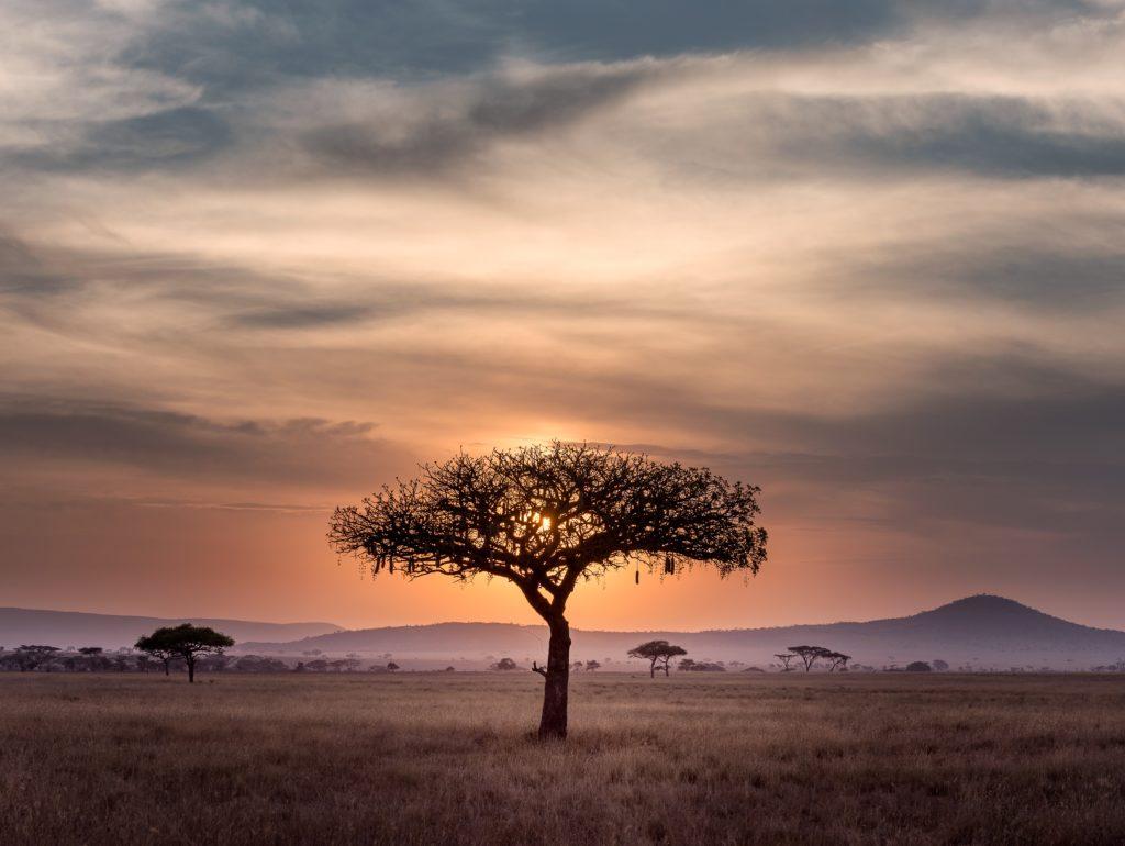 Afrique : nouveaux vecteurs durables