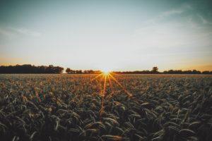 Accompagner le monde agricole dans la transition vers des productions écologiques et rentables